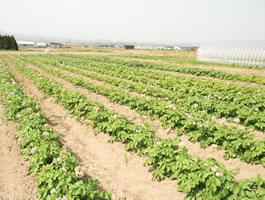 農業生産法人 有限会社アースファーム